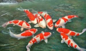 Известкование пруда с рыбой — как и когда проводить, средства для известкования, видео