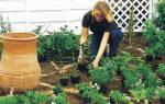 Дайте совет — что посадить на клумбе около дома