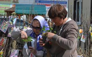Воронежская выставка «Усадьба» — полезное и важное мероприятие