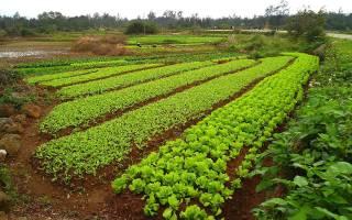Сидераты — лучшие зеленые удобрения для огорода, видео