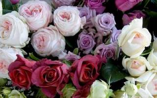 Французские розы: характерные отличия, сорта, видео