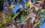 Виды орхидей — фото и названия фаленопсиса, дендробиума, луидизии, цимбидиума, мильтонии, камбрии, дракула, каттлеи, ванды, видео