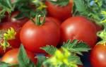 Грибковые заболевания томатов — признаки, методы профилактики и борьбы, видео