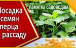 Когда садить перец на рассаду — видео, советы