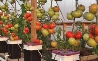 Помидоры на гидропонике — система, питательный раствор, видео