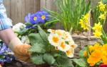 Цветы в саду и огороде как правильно посадить цветы на даче
