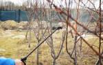 Опрыскивание деревьев весной — сроки проведения, раствор, видео
