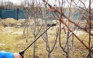 Чем обработать плодовые деревья и кустарники весной, видео