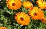Какие цветы высаживаем и сеем в апреле месяце, видео