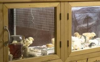 Брудер для цыплят — изготовление своими руками по разработанным чертежам, температура в клетке, видео