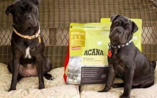 Акана — корм для собак и кошек, щенков, видео