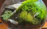 Как самостоятельно собрать мох в лесу для террариума, видео
