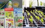 Препарат Стимул — стимулятор роста и комплексное удобрение, видео
