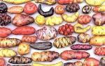 Самые интересные факты из истории картофеля + видео