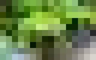 Микориза — что это и как используется при выращивании цветов, видео
