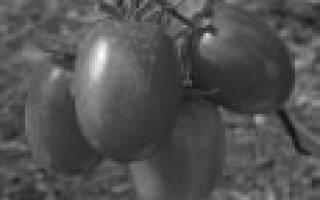 Засолочные сорта помидор — читайте подробнее
