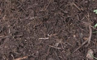 Гумус — что это такое, как образуется, содержание гумуса в тайге, тундре, подзолистых почвах, видео