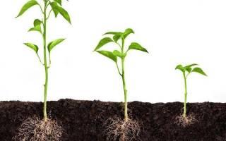 Регуляторы роста растений — классификация, применение, видео