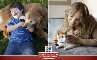 Корм Хиллс для кошек и собак — сухой, лечебный, для щенков и котят, видео