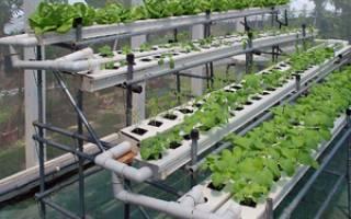 Гидропоника — оборудование для выращивания овощей, цветов, раствор, светильники, поддоны, видео