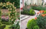 Розы в ландшафтном дизайне дачного участка, идеи, видео