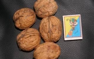 Крупноплодные сорта ореха — обзор лучших сортов, видео
