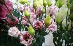 Цветы, похожие на розу: название, видео