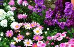 Дайте схемы сочетания цветов на клумбе