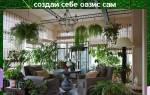 Зимний сад в квартире своими руками — как сделать, идеи дизайна