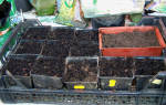 Заботы дачника в феврале в теплицах и на грядках, подготовка и посев семян, видео
