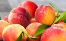 Как называется персик, скрещенный со сливой, особенности гибридов