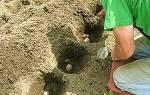 На какую глубину сажать картофель, расстояние между корнями + видео