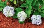 Опавшие листья — использование для мульчирования грядок, сада, клумб, видео