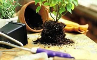 Пересадка комнатных растений — сроки и правила, выбор горшков, видео