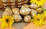 Как употреблять топинамбур, полезные свойства растения