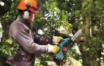 Электрическая цепная пила — какую выбрать для работы в саду и на стройке, видео