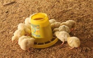 Кормушка для цыплят своими руками — как сделать и из какого материала, видео