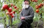 Обзор лучших сортов помидор для Урала с фото + видео