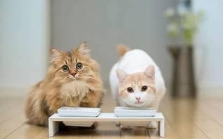 Корм для кошек — сухой, лечебный, жидкий, натуральный, состав, видео