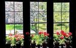 Герань комнатная — фото видов и сортов душистой, пионовидной, розовидной, плющелистной герани с названиями и описанием, видео