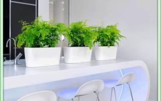 Адиантум — как посадить растение в новый горшок, подготовка грунта, видео