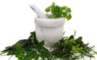 Лекарственные растения — Glav-Dacha.ru