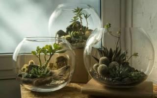 Флорариум своими руками — выбор почвы, растений, декорация, видео