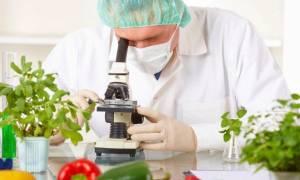 Клонирование растений в домашних условиях, как происходит