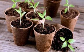 Как пользоваться торфяными горшочками для выращивания рассады — видео
