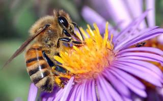 Самые актуальные и полезные статьи о пчелах