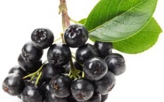 Полезные свойства черноплодной рябины, как использовать, видео
