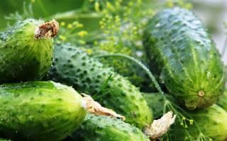 Выращивание огурцов в открытом грунте — способы, секреты