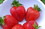 Как правильно высаживать клубнику семенами + видео