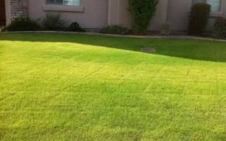 Почему газон желтеет после стрижки — возможные причины желтизны газона